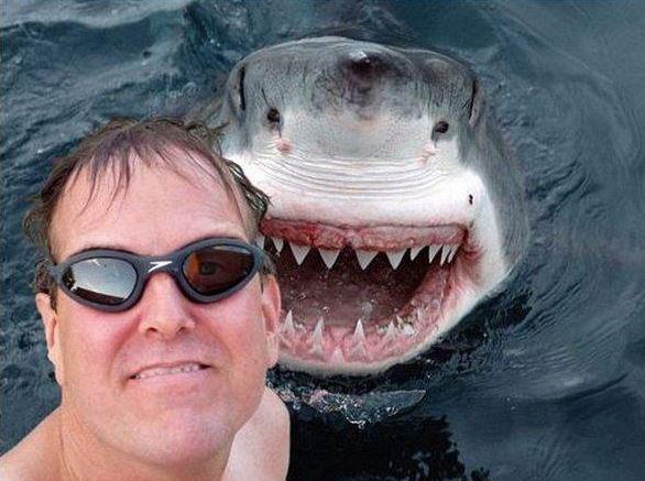 Selfies gone wrong